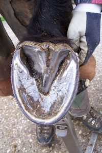 Cleaning Your Horse's Hooves