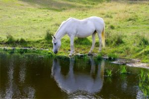 Horse Properly Hydrated